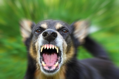 dog showing teeth